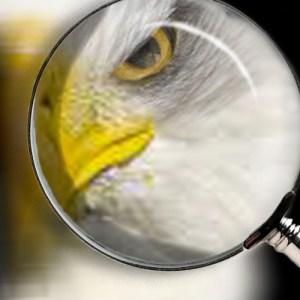 Eagle Eye | Coulson and Associates