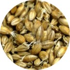 grains_malt