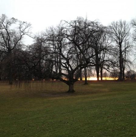 (c) Karl Baumann 2012 - der Baum auf Spielbahn 3, die erste