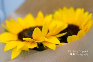 Two Wrapped Eymet Sunflowers with Close up of Petals