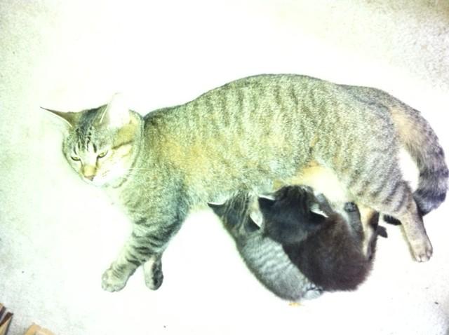 Motherhood at it's best!
