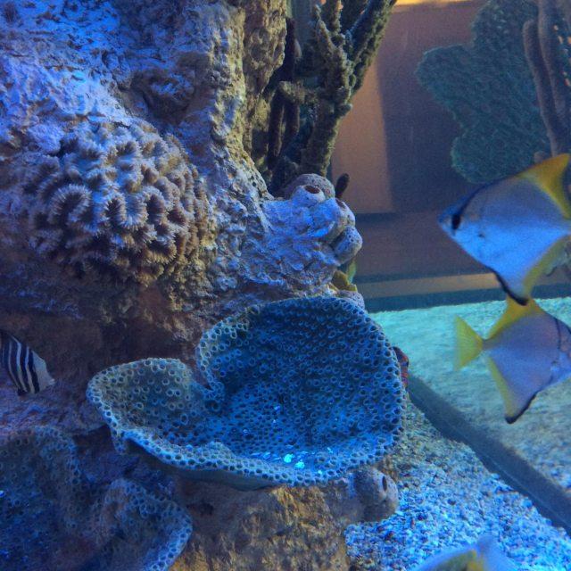 Aquarium photo by Karl Robb