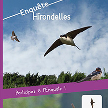 Roll-up Hirondelles