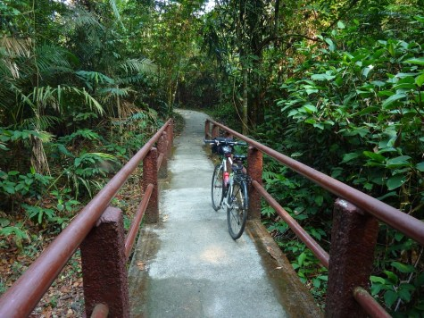 Once I entered the park, there were a few offshoot trails out to see waterfalls or other lookout points. This one I tried to bike to, but then there were stairs later on.... oops!