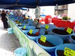 Produce market in Gallipoli... these made me wish I liked olives