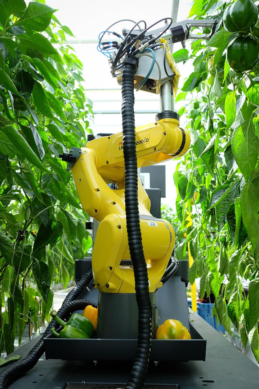 Агро-робот SweepBot
