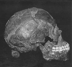 Qafzeh 9 skull