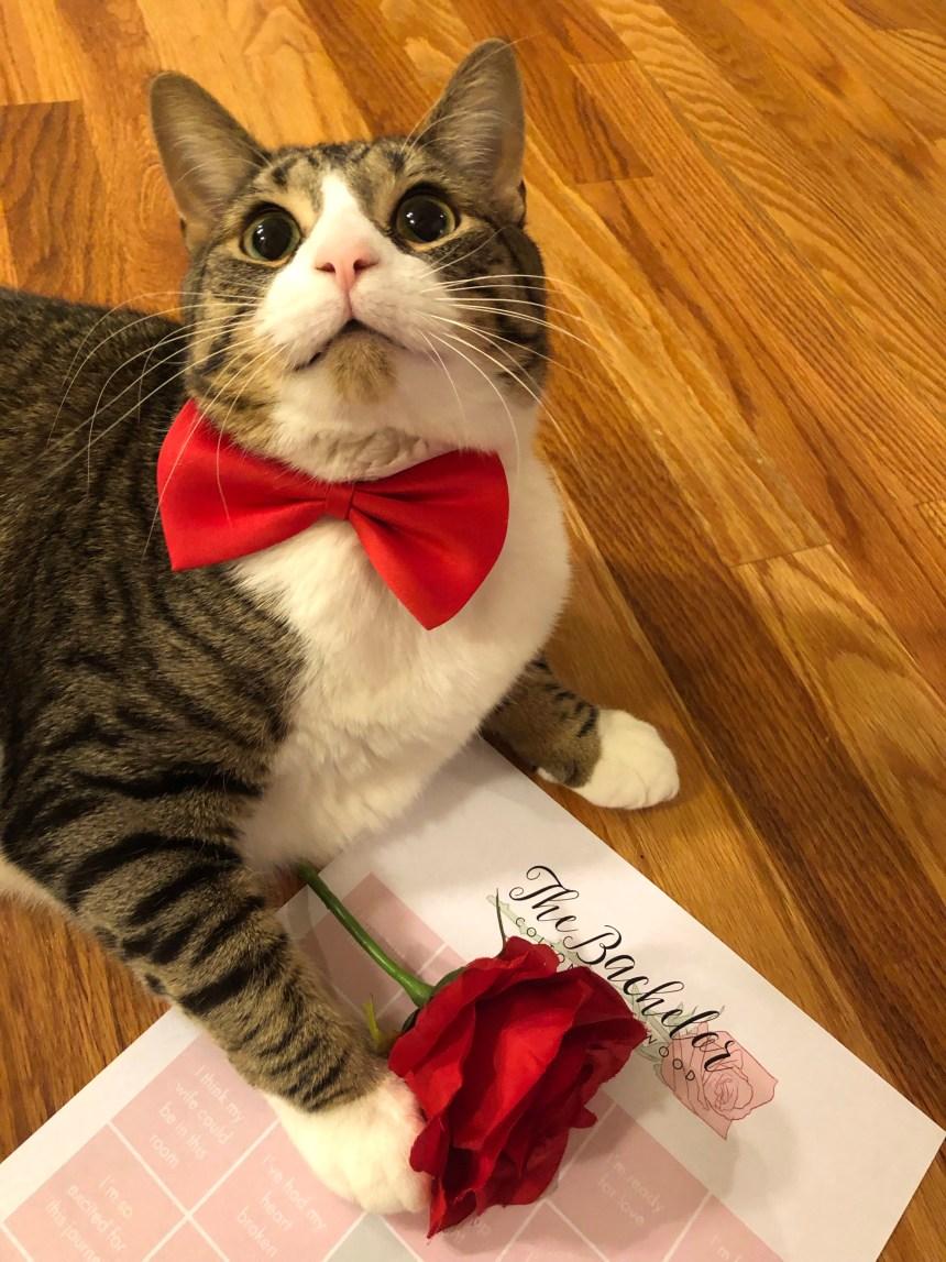 Cats Valentines