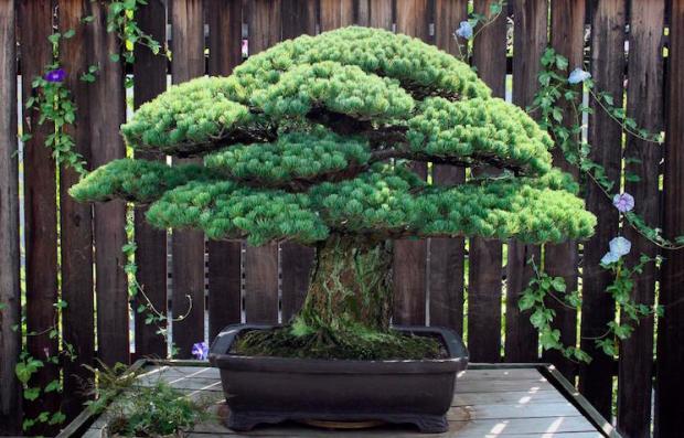 The Atomic Tree
