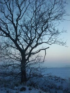 frozen_winter_tree_by_hokota-d35iod4