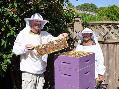 Beekeepers with an open bee hive