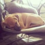 My little angel sleeping