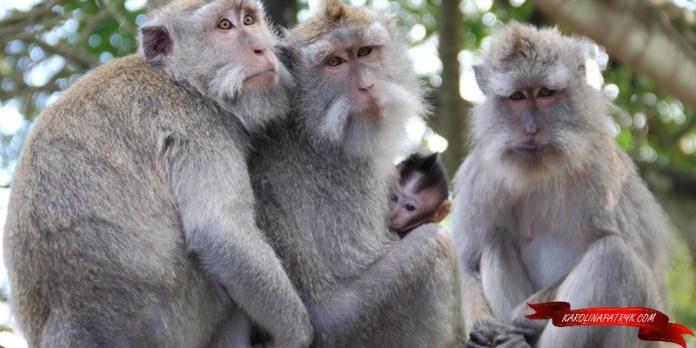 Cute Monkey Family in Bali