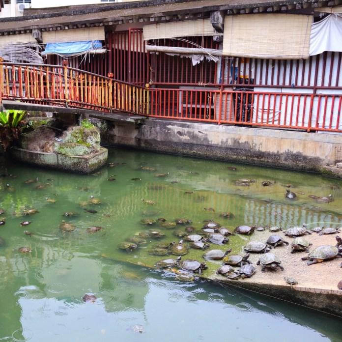 tortoise of Vietnam | Weird fact about Vietnam