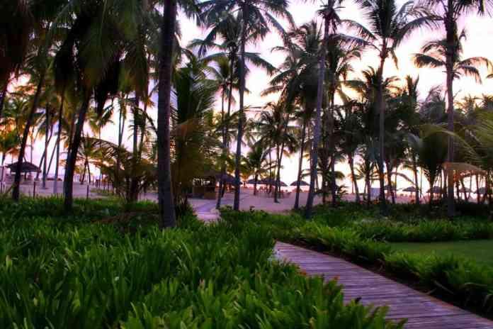 Florida Facts: Weird Laws   Florida Palm Trees