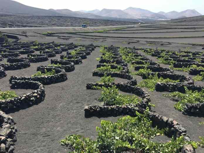 Wines of Spain: Lanzarote