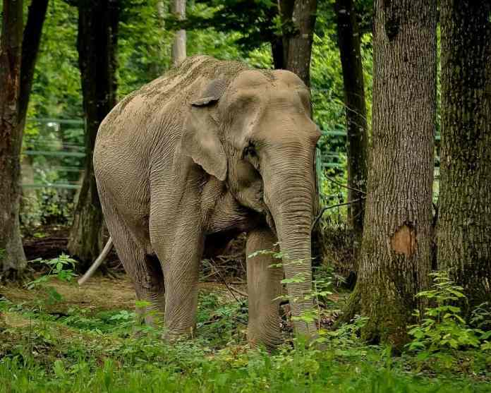 Fun facts of India: the elephant spas