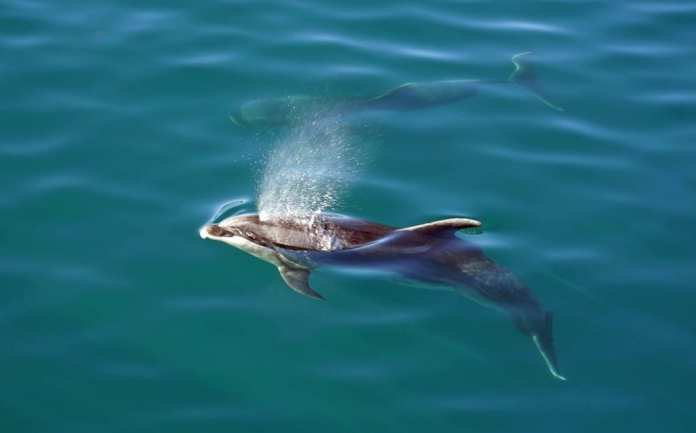 dolphins new zealand honeymoon