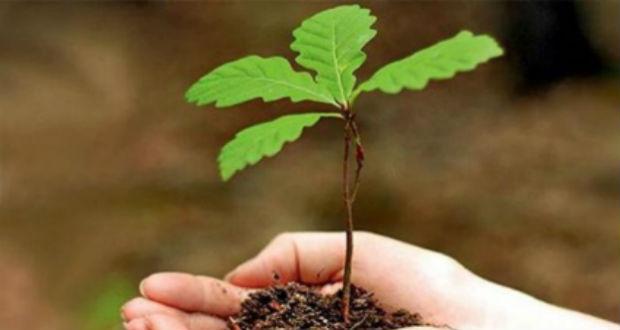Több mint 150 ezer facsemetét ültetnek tavasszal a Beregszászi járásban