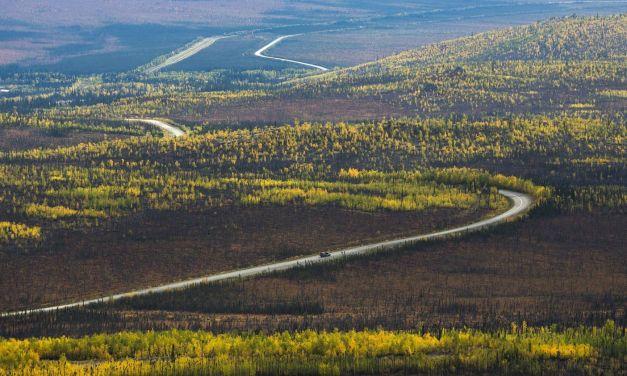 Trump engedélyezné a világ legnagyobb mérsékelt övi esőerdejében a fakivágást