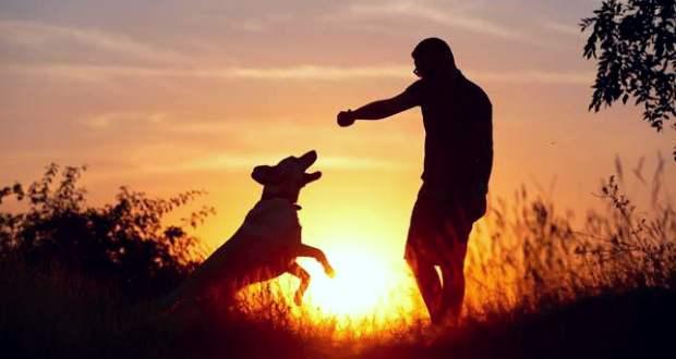 Amilyen a gazda, olyan a kutyája – és fordítva?