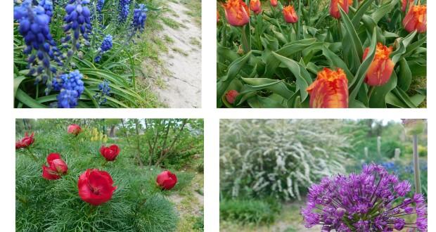 Kárpátalja ma: virágzó botanikus kert