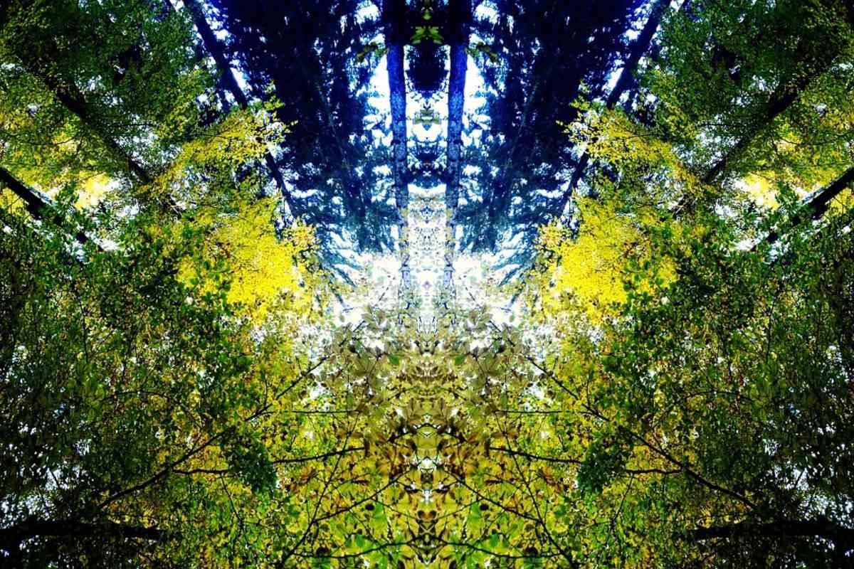 erdő fák