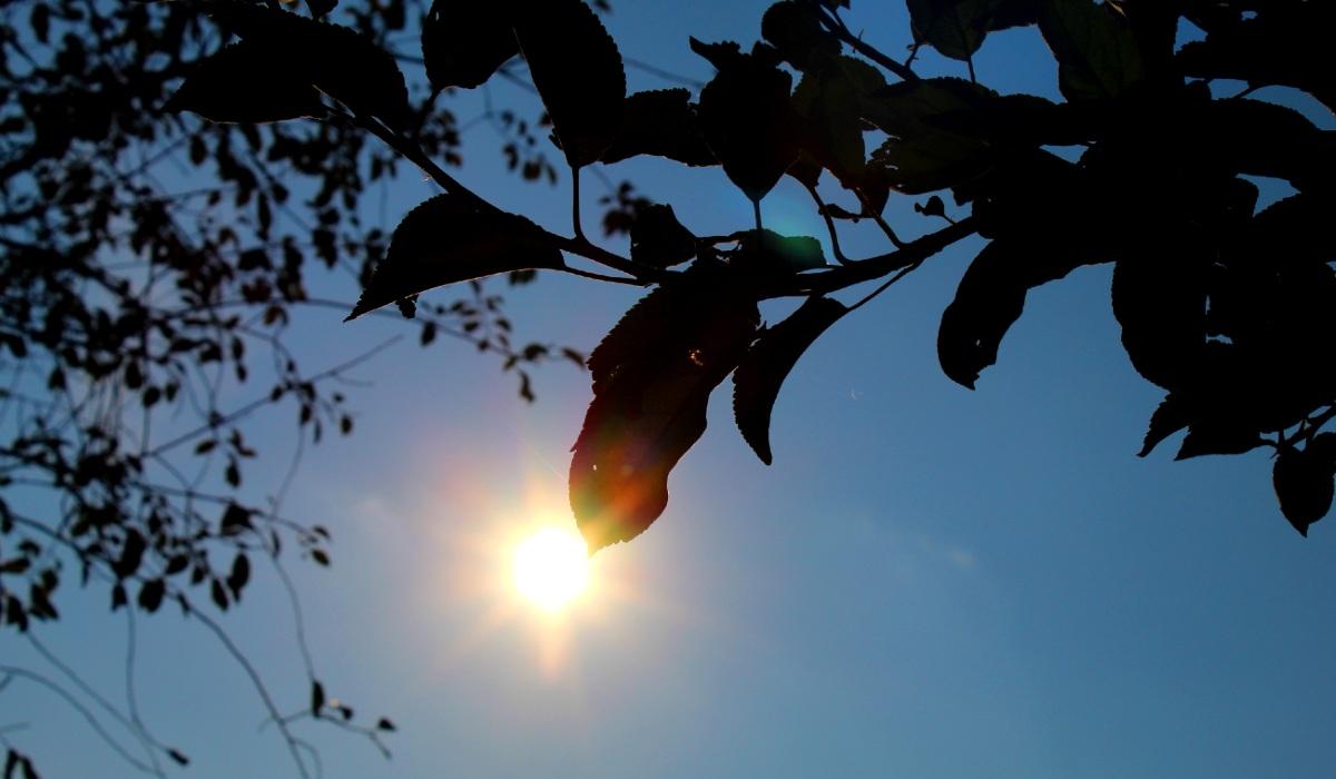 ősz napsütés falevél ágak