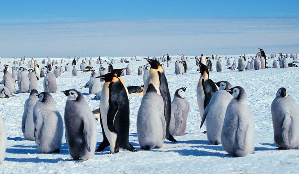 Déli-sark pingvinek