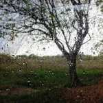 Eső várható a hét második felében