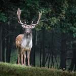 """""""Szarvasbarát"""" zacskókkal óvják az állatokat a műanyagszeméttől Japánban"""