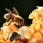 A mézben lévő rovarirtószer kimutatására fejlesztettek ki új módszert