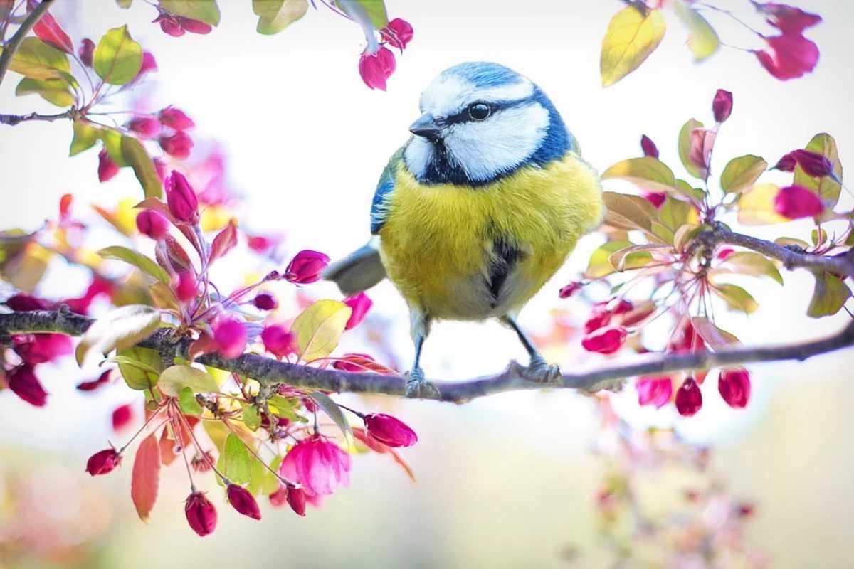 tavasz madár