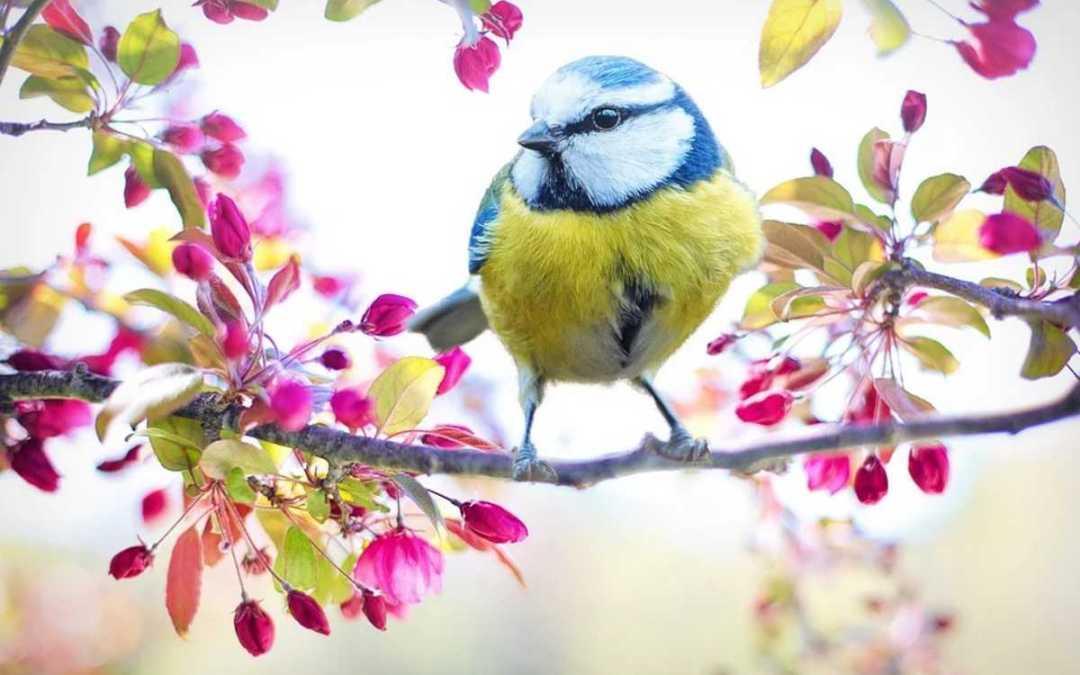 Hogyan csalogassuk kertünkbe a madarakat?