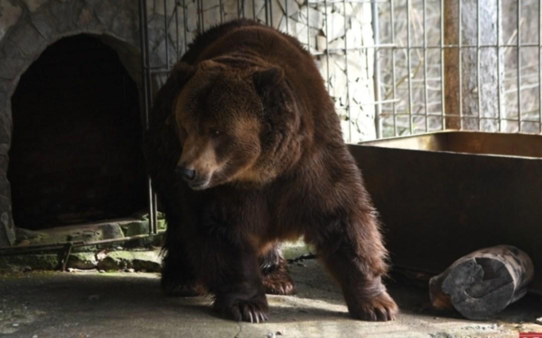 Kárpátalja ma: új lakó költözött a szinevéri medveparkba