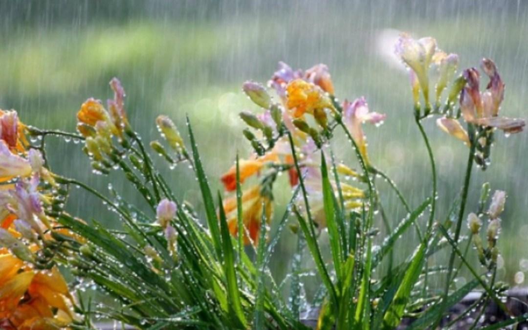 Esősnek és hűvösnek ígérkezik a hét