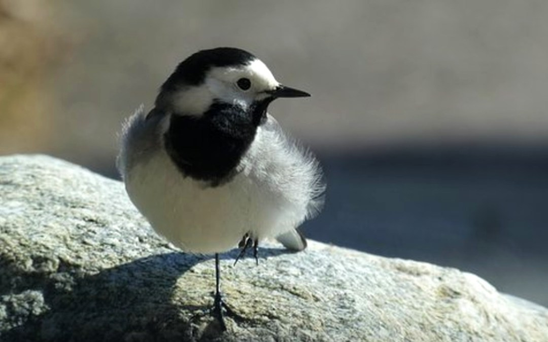 Mit tegyünk, ha magányos madárfiókát találunk?