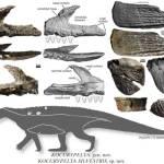 Krokodilszerű őshüllőfaj maradványait fedezték fel Lengyelországban