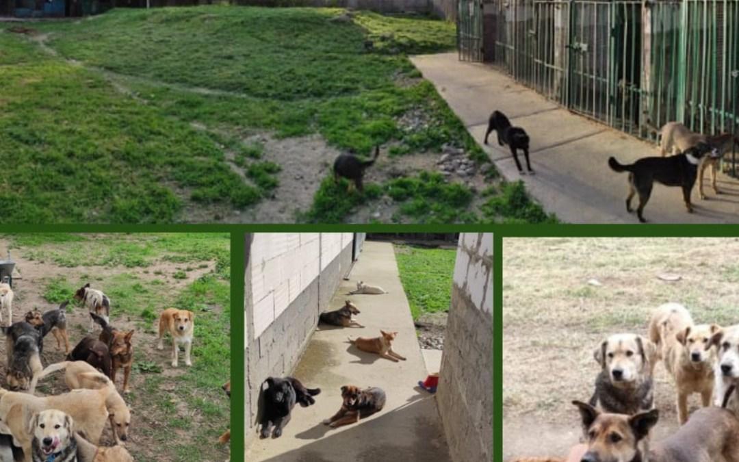 Önkénteseket keresnek a beregszászi állatmenhelyre