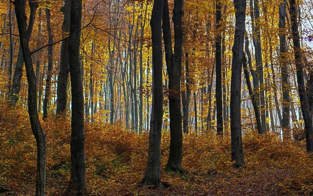 Путевки в Карпаты осенью