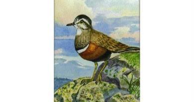Птицы Северного Урала