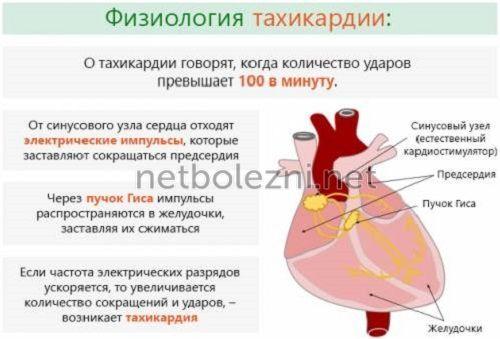 Αρχές ανάπτυξης της ταχυκαρδίας