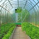 Теплиці з полікарбонату стають все більш популярними в Україні
