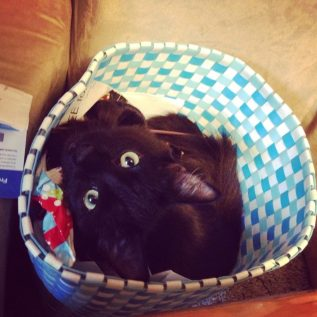 Black cat in a basket