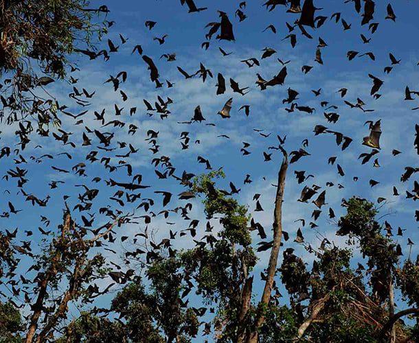 Kasanka Bat Forest, Zambia