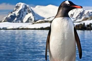 Antarctica feature