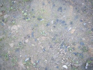 Crottes de lapin