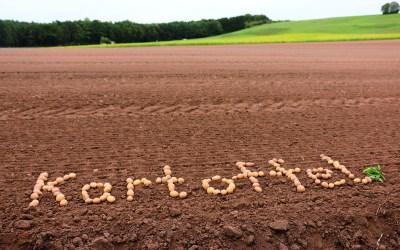 Kartoffeltag in Gundelshalm 15.09.19