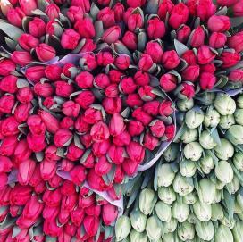 tulipanes mercado muenster