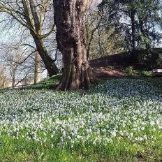 Primavera en die Promenade